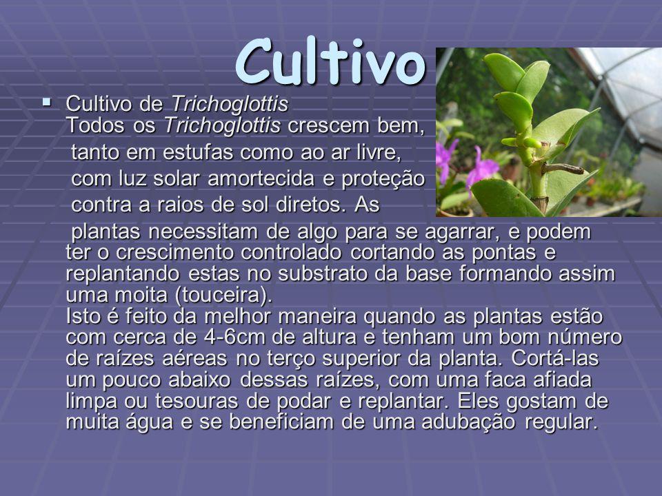 Cultivo  Cultivo de Trichoglottis Todos os Trichoglottis crescem bem, tanto em estufas como ao ar livre, tanto em estufas como ao ar livre, com luz s