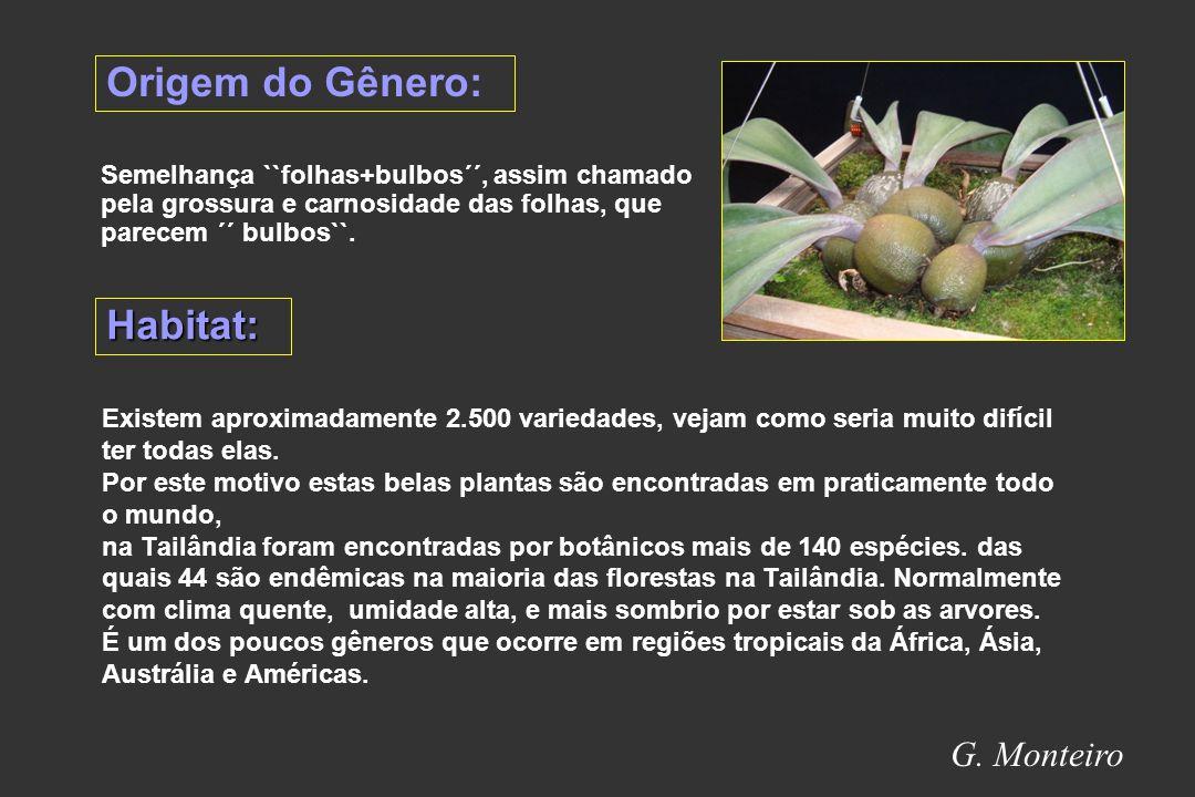 G. Monteiro Material de replante