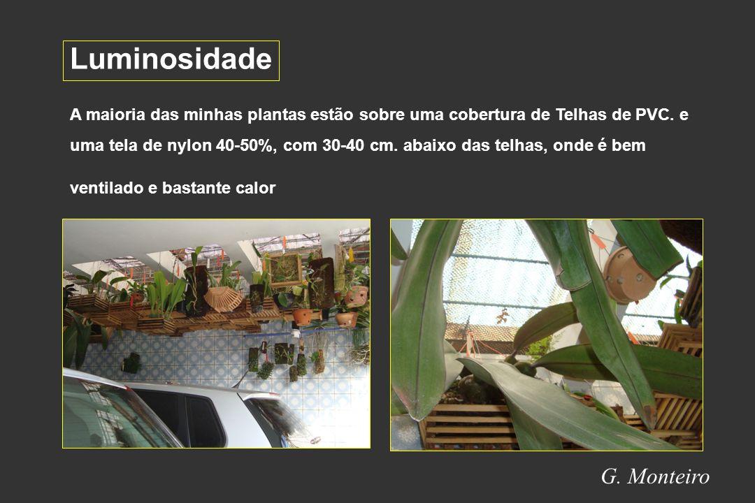 G.Monteiro Luminosidade A maioria das minhas plantas estão sobre uma cobertura de Telhas de PVC.