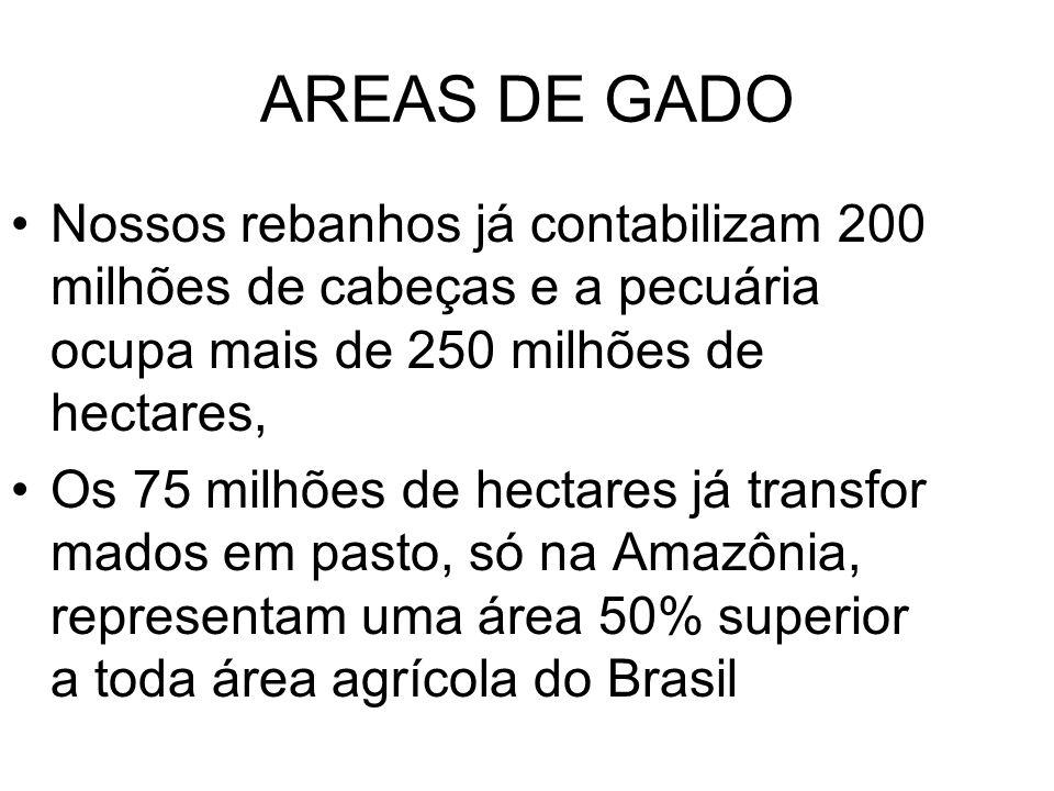 AREAS DE GADO Nossos rebanhos já contabilizam 200 milhões de cabeças e a pecuária ocupa mais de 250 milhões de hectares, Os 75 milhões de hectares já