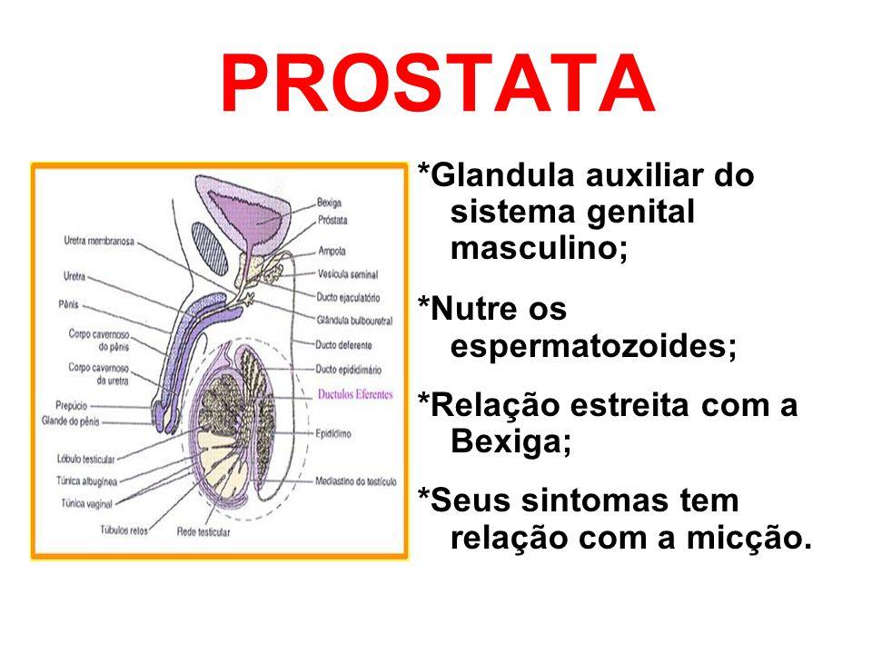 PROSTATA *Glandula auxiliar do sistema genital masculino; *Nutre os espermatozoides; *Relação estreita com a Bexiga; *Seus sintomas tem relação com a
