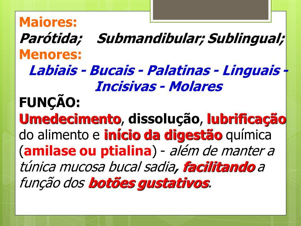 Maiores: Parótida; Submandibular; Sublingual; Menores: Labiais - Bucais - Palatinas - Linguais - Incisivas - Molares FUNÇÃO: Umedecimento, dissolução,