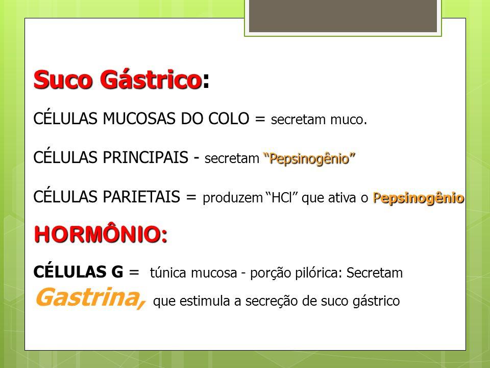"""Suco Gástrico: CÉLULAS MUCOSAS DO COLO = secretam muco. CÉLULAS PRINCIPAIS - secretam """"Pepsinogênio"""" CÉLULAS PARIETAIS = produzem """"HCl"""" que ativa o Pe"""