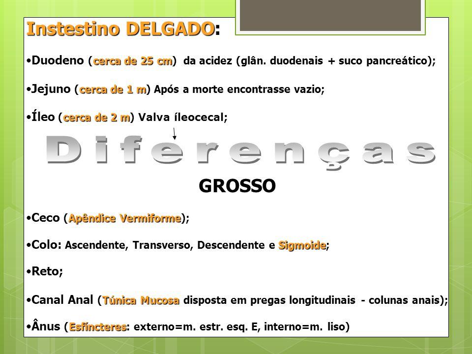 Instestino DELGADO: Duodeno (cerca de 25 cm) da acidez (glân. duodenais + suco pancreático);Duodeno (cerca de 25 cm) da acidez (glân. duodenais + suco