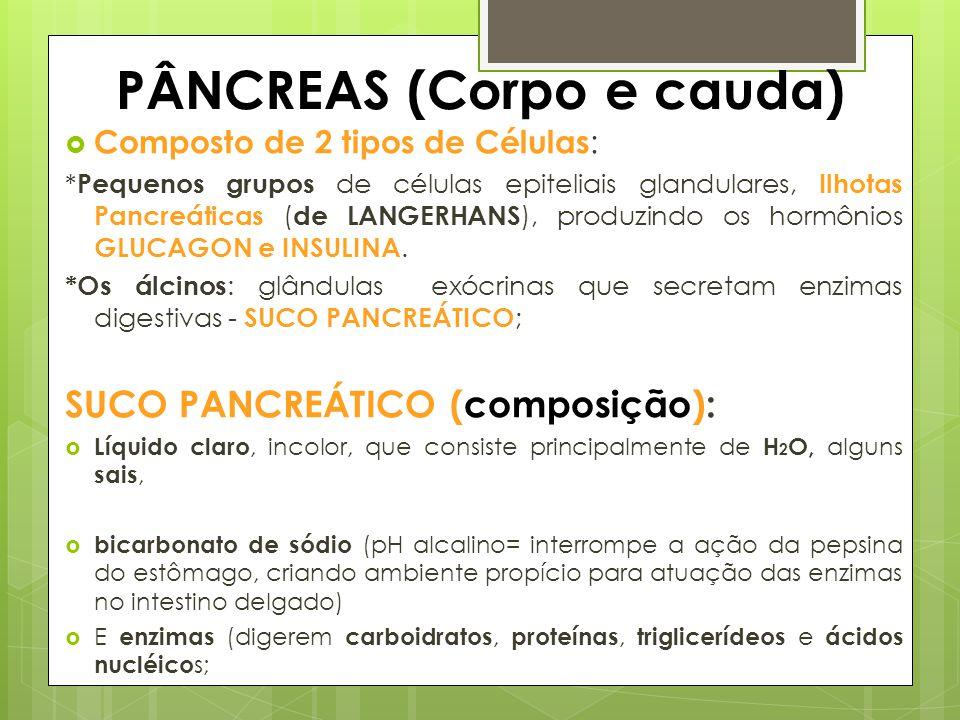 PÂNCREAS (Corpo e cauda)  Composto de 2 tipos de Células : * Pequenos grupos de células epiteliais glandulares, Ilhotas Pancreáticas ( de LANGERHANS