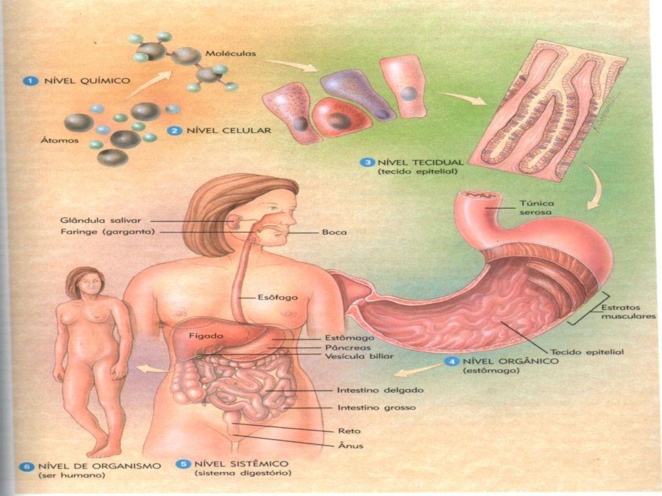 Processos Digestórios  Ingestão ou englobamento ;  Digestão: PROCESSOS QUÍMICOS : Reações que degradam moléculas grandes e complexas de CARBOIDRATOS, LIPÍDIOS e PROTEÍNAS em moléculas simples.