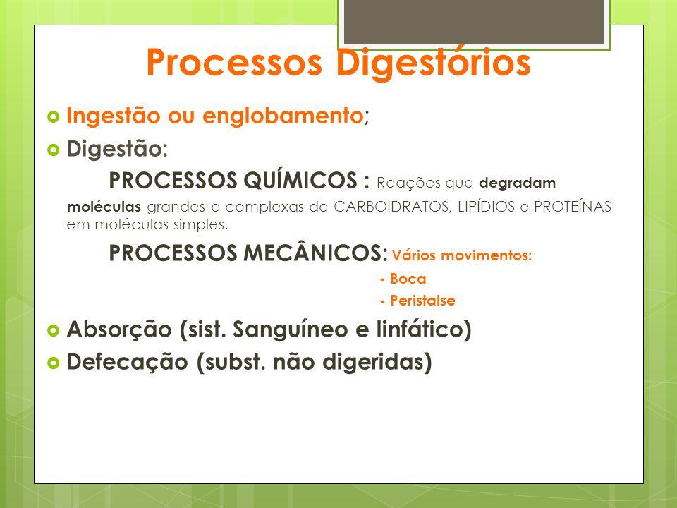 Processos Digestórios  Ingestão ou englobamento ;  Digestão: PROCESSOS QUÍMICOS : Reações que degradam moléculas grandes e complexas de CARBOIDRATOS