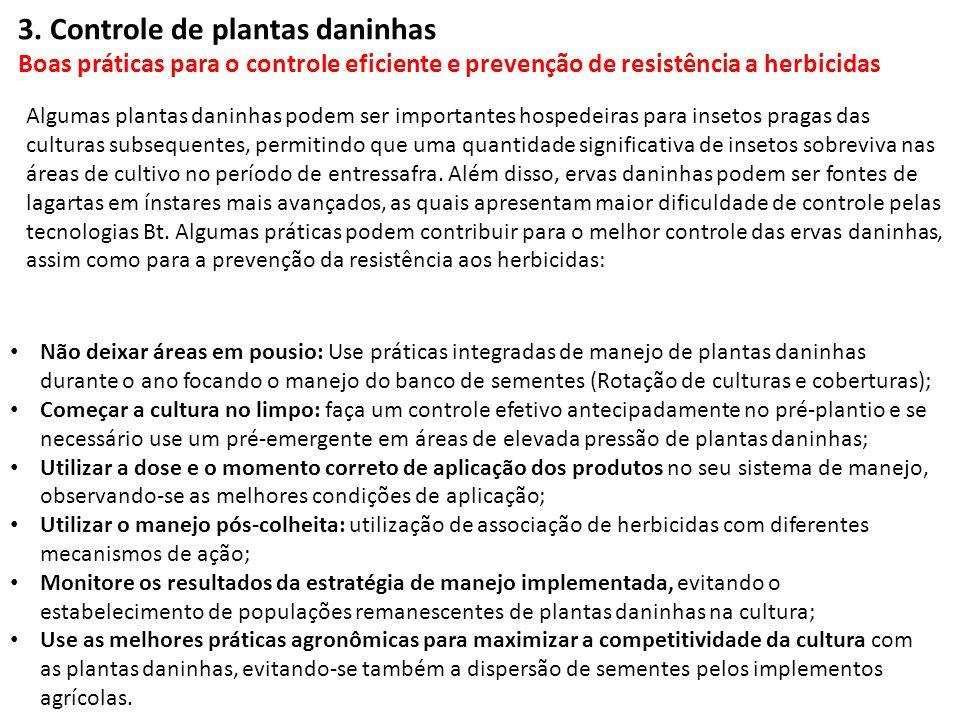 Não deixar áreas em pousio: Use práticas integradas de manejo de plantas daninhas durante o ano focando o manejo do banco de sementes (Rotação de cult