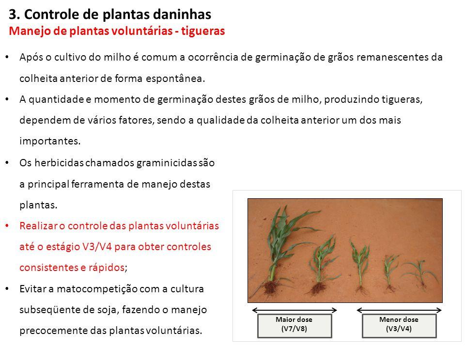 Menor dose (V3/V4) Maior dose (V7/V8) Os herbicidas chamados graminicidas são a principal ferramenta de manejo destas plantas. Realizar o controle das