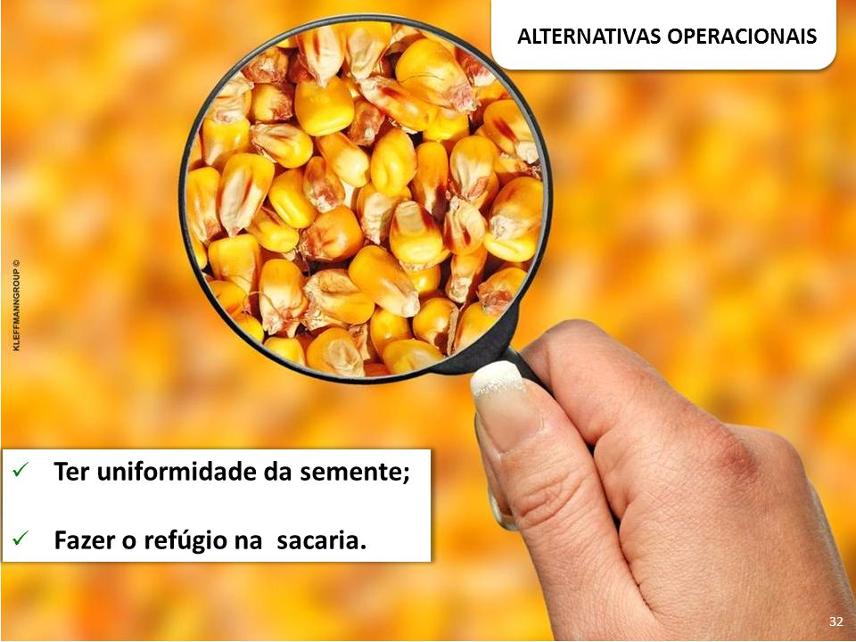 ALTERNATIVAS OPERACIONAIS Ter uniformidade da semente; Fazer o refúgio na sacaria. 32