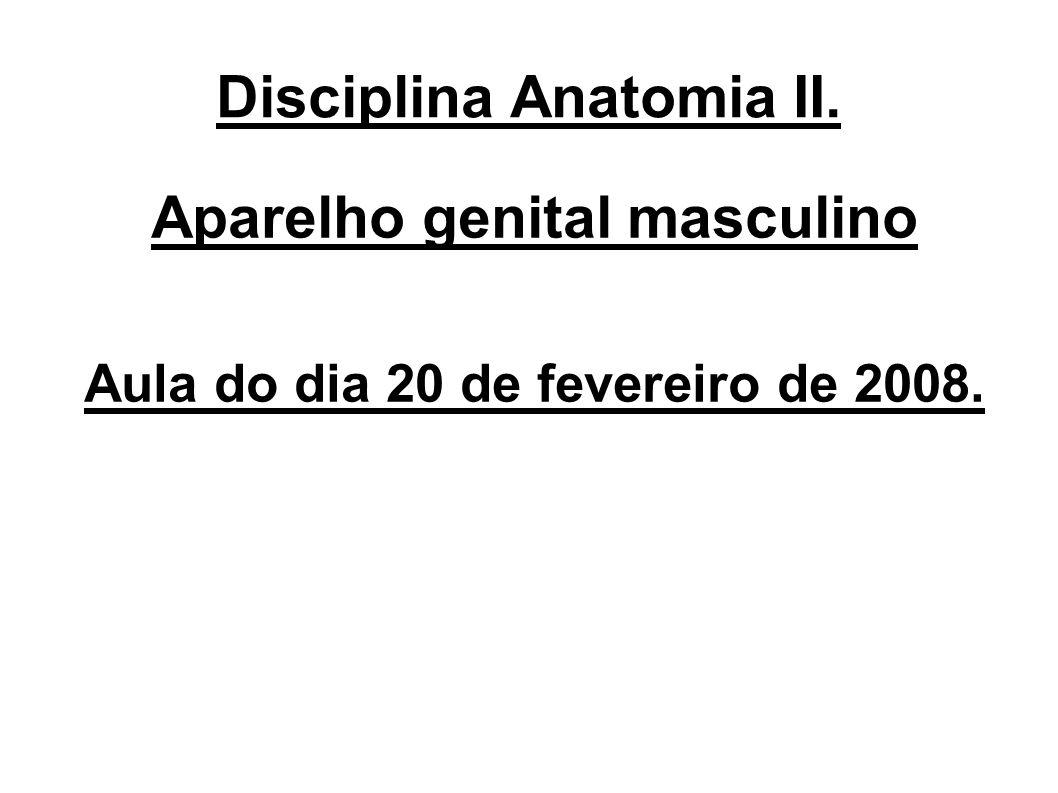 Disciplina Anatomia II. Aparelho genital masculino Aula do dia 20 de fevereiro de 2008.