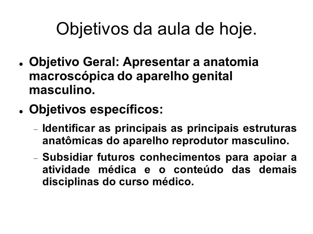 Objetivos da aula de hoje. Objetivo Geral: Apresentar a anatomia macroscópica do aparelho genital masculino. Objetivos específicos:  Identificar as p