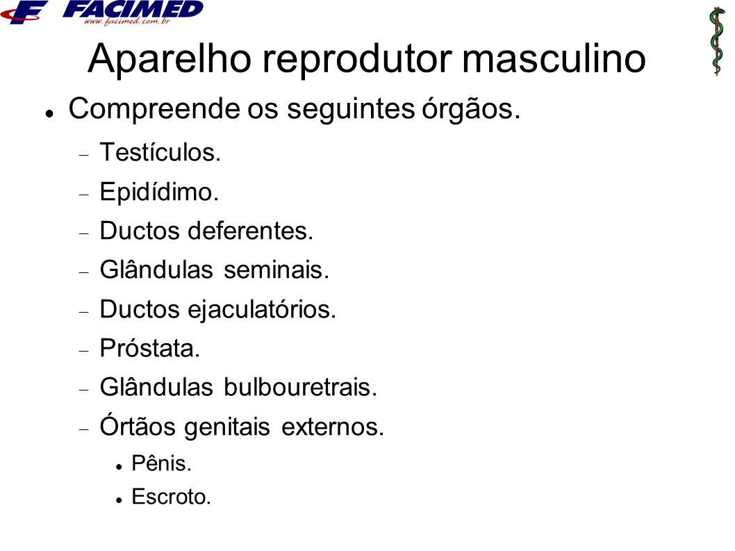 Aparelho reprodutor masculino Compreende os seguintes órgãos.  Testículos.  Epidídimo.  Ductos deferentes.  Glândulas seminais.  Ductos ejaculató
