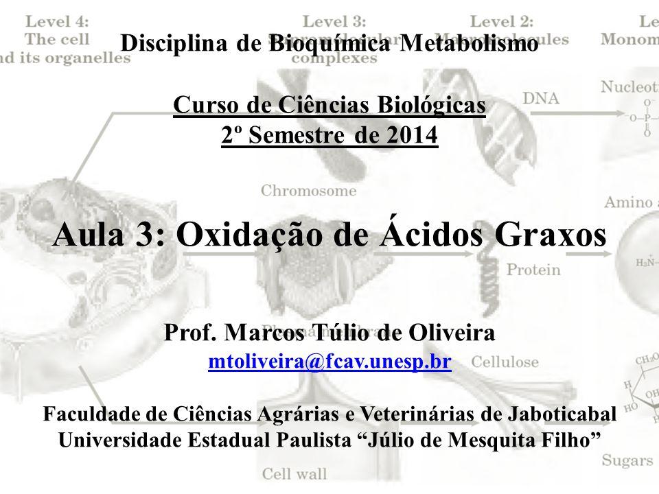 Disciplina de Bioquímica Metabolismo Curso de Ciências Biológicas 2º Semestre de 2014 Aula 3: Oxidação de Ácidos Graxos Prof. Marcos Túlio de Oliveira