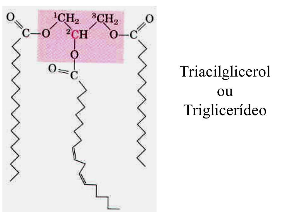 Triacilglicerol ou Triglicerídeo