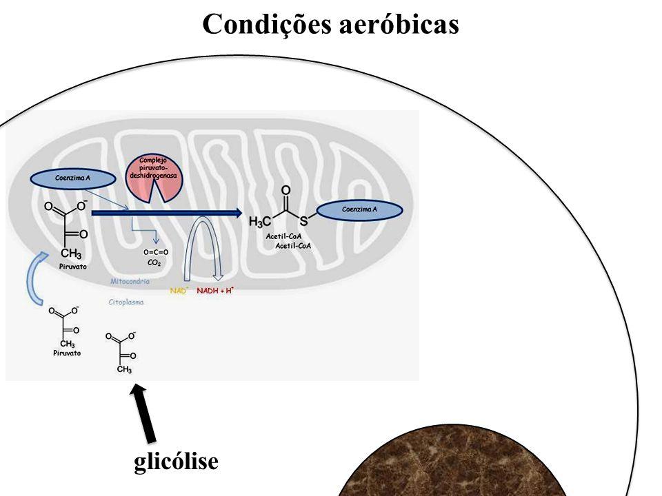 Condições aeróbicas glicólise