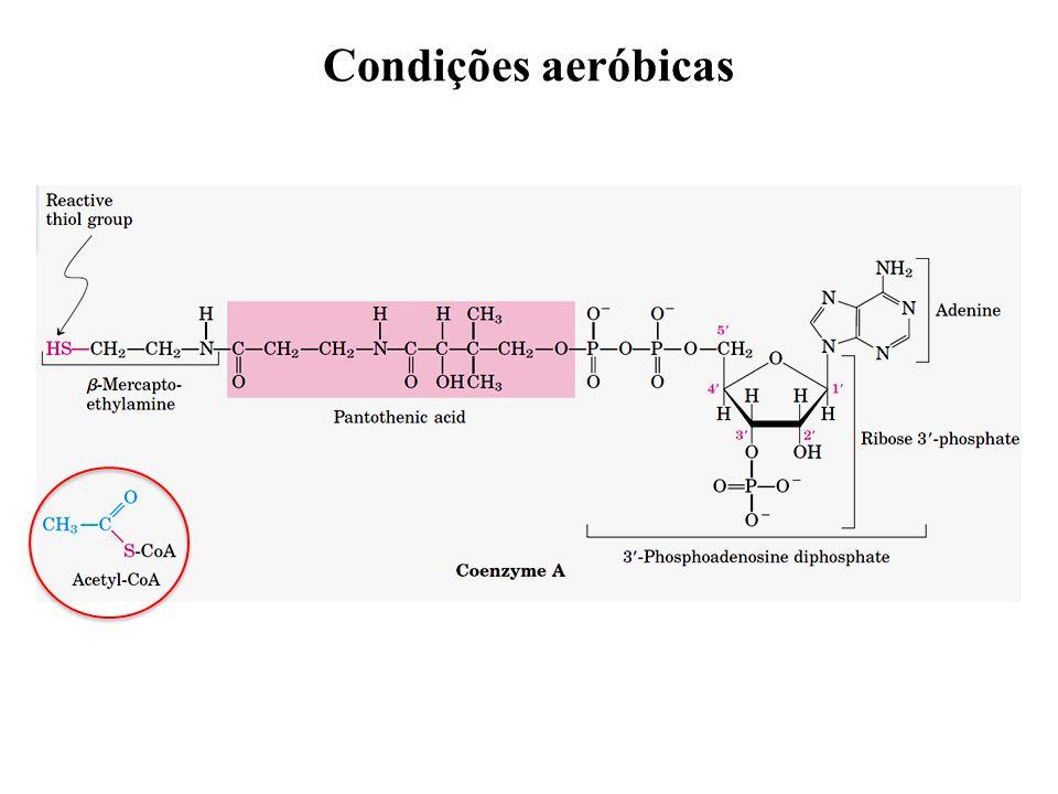 Condições aeróbicas