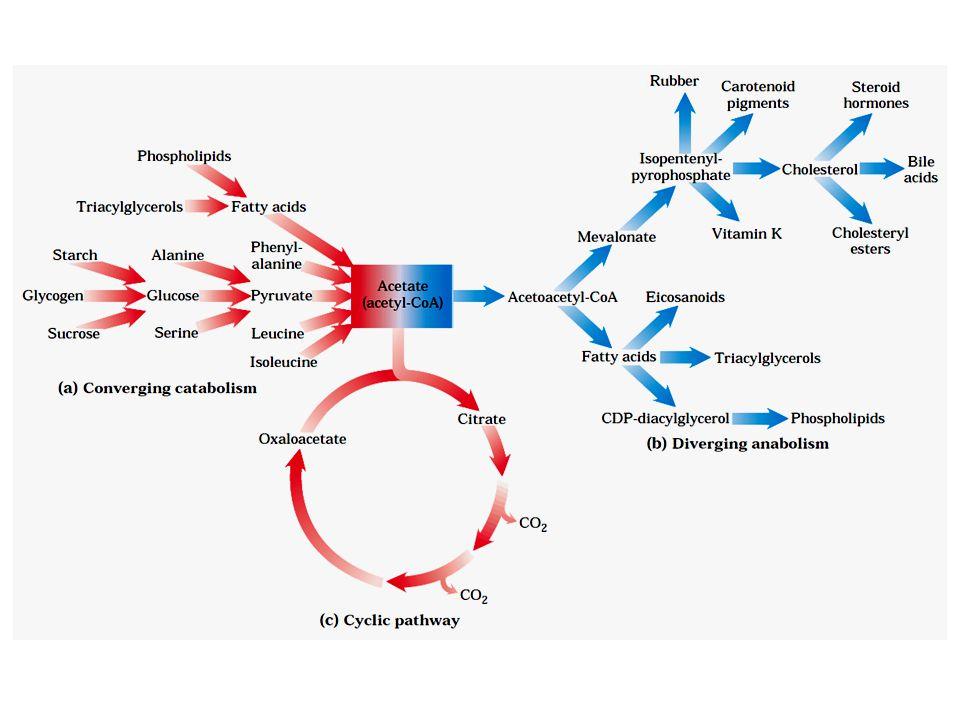 O Óleo de Lorenzo http://vimeo.com/35827828 Adrenoleucodistrofia (ADL) acúmulo de ácidos graxos saturados de cadeia longa que atinge as células do cérebro, destruindo a bainha de mielina.