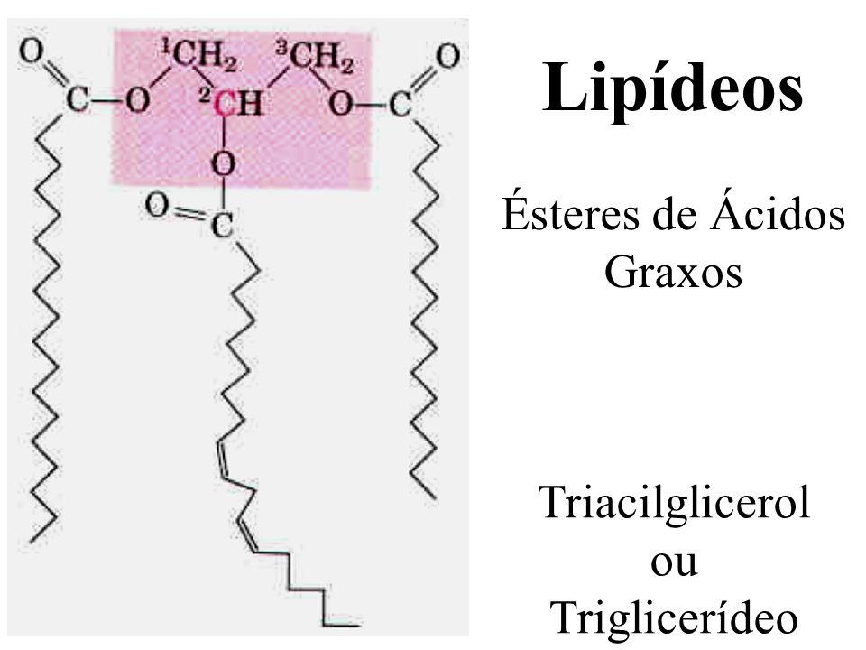 Lipídeos Ésteres de Ácidos Graxos Triacilglicerol ou Triglicerídeo