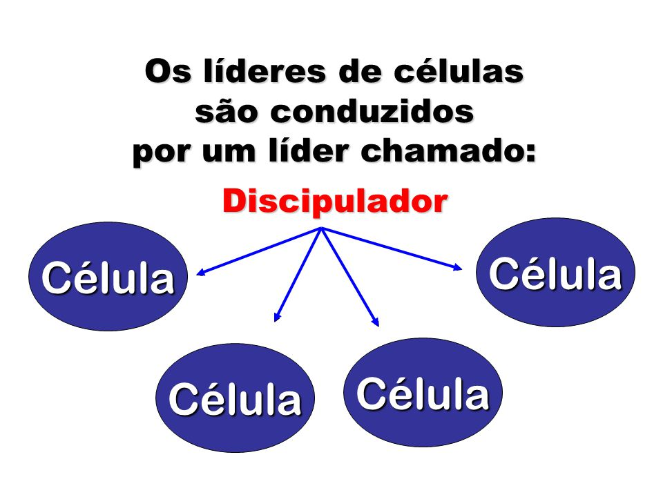 Célula Célula Célula Célula Os líderes de células são conduzidos por um líder chamado: Discipulador