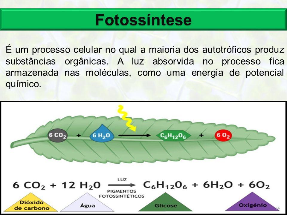Fotossíntese É um processo celular no qual a maioria dos autotróficos produz substâncias orgânicas. A luz absorvida no processo fica armazenada nas mo