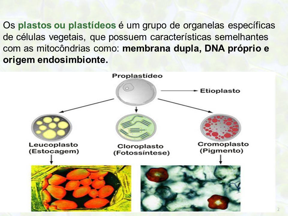 2 Os plastos ou plastídeos é um grupo de organelas específicas de células vegetais, que possuem características semelhantes com as mitocôndrias como: