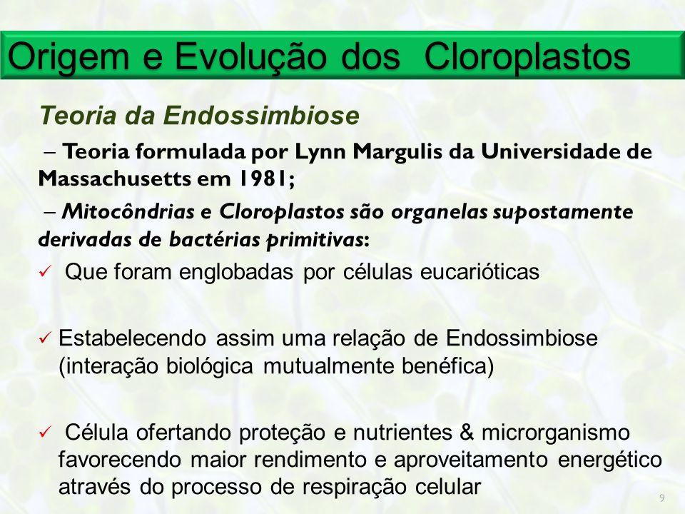 Origem e Evolução dos Cloroplastos Teoria da Endossimbiose – Teoria formulada por Lynn Margulis da Universidade de Massachusetts em 1981; – Mitocôndri