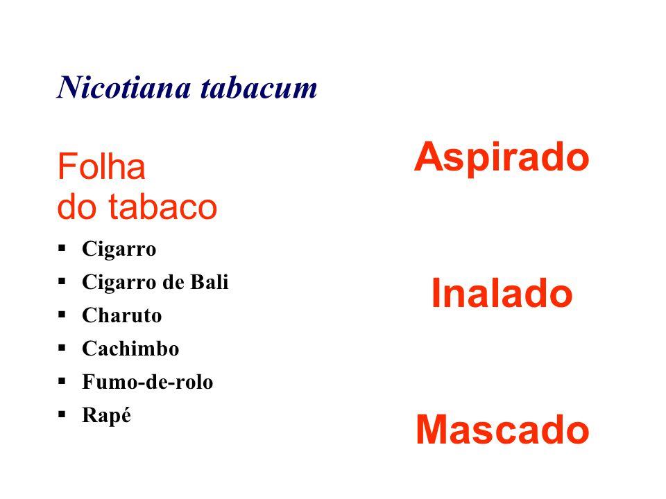 Nicotiana tabacum Folha do tabaco  Cigarro  Cigarro de Bali  Charuto  Cachimbo  Fumo-de-rolo  Rapé Aspirado Inalado Mascado