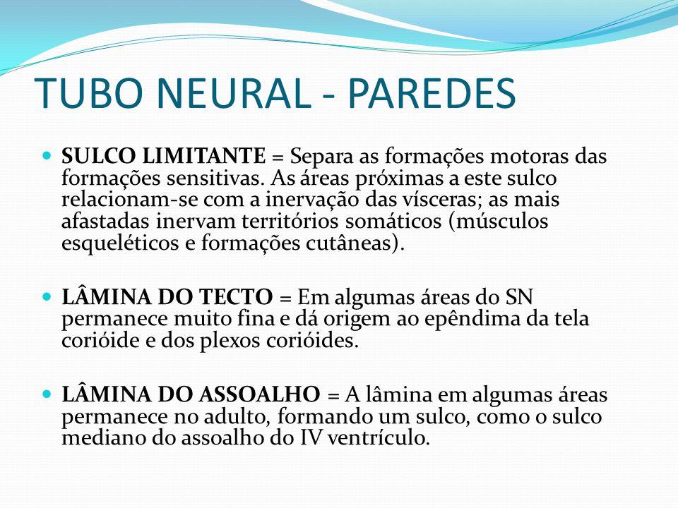 TUBO NEURAL - PAREDES SULCO LIMITANTE = Separa as formações motoras das formações sensitivas.