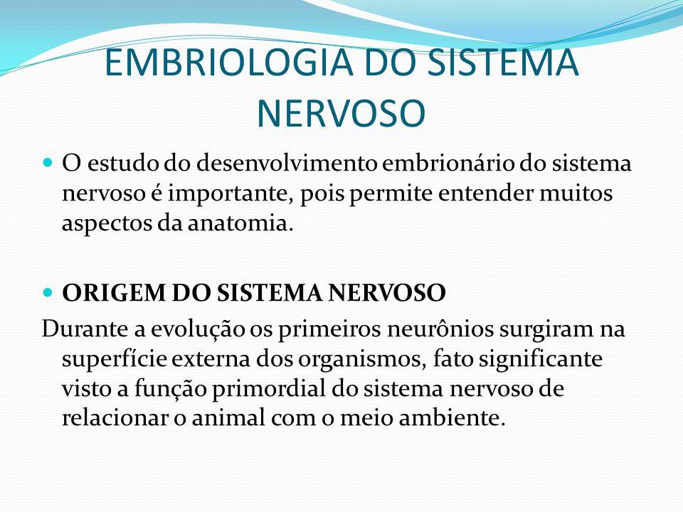 EMBRIOLOGIA DO SISTEMA NERVOSO O estudo do desenvolvimento embrionário do sistema nervoso é importante, pois permite entender muitos aspectos da anatomia.