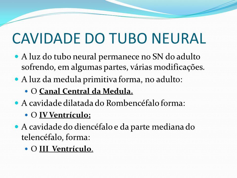 CAVIDADE DO TUBO NEURAL A luz do tubo neural permanece no SN do adulto sofrendo, em algumas partes, várias modificações.