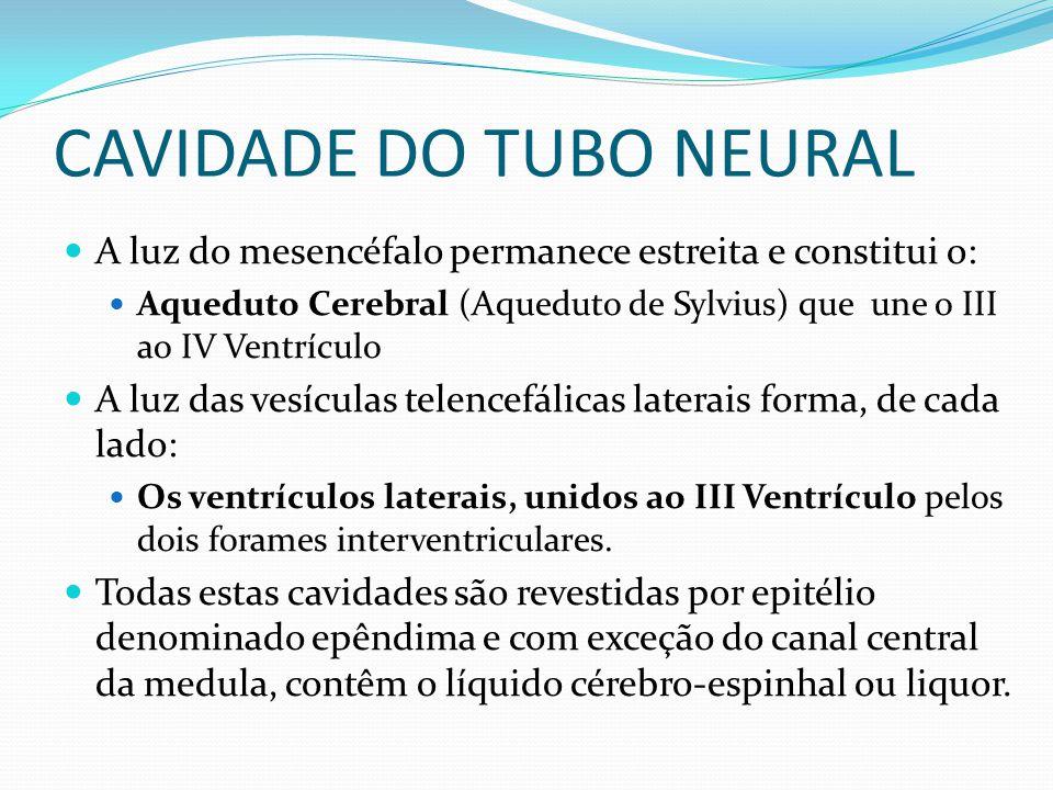 CAVIDADE DO TUBO NEURAL A luz do mesencéfalo permanece estreita e constitui o: Aqueduto Cerebral (Aqueduto de Sylvius) que une o III ao IV Ventrículo A luz das vesículas telencefálicas laterais forma, de cada lado: Os ventrículos laterais, unidos ao III Ventrículo pelos dois forames interventriculares.