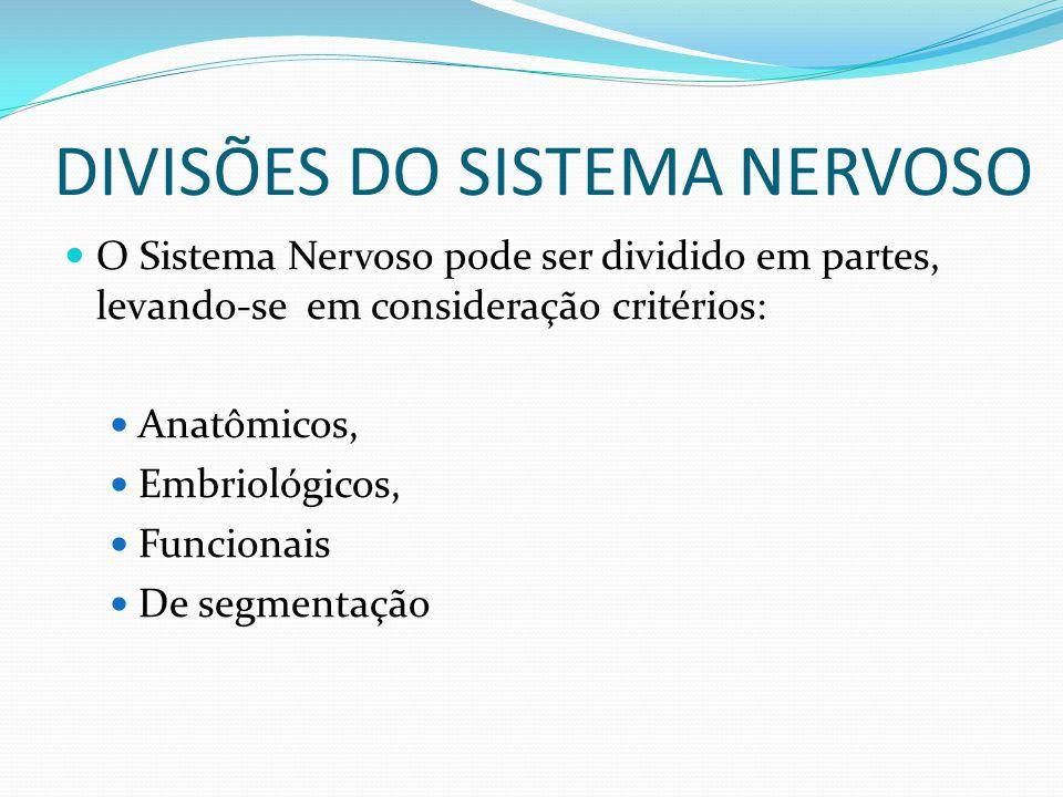 DIVISÕES DO SISTEMA NERVOSO O Sistema Nervoso pode ser dividido em partes, levando-se em consideração critérios: Anatômicos, Embriológicos, Funcionais De segmentação