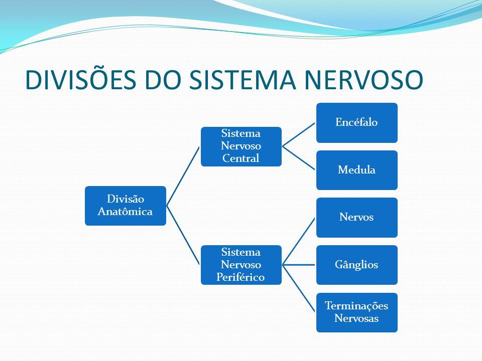 DIVISÕES DO SISTEMA NERVOSO Divisão Anatômica Sistema Nervoso Central EncéfaloMedula Sistema Nervoso Periférico NervosGânglios Terminações Nervosas