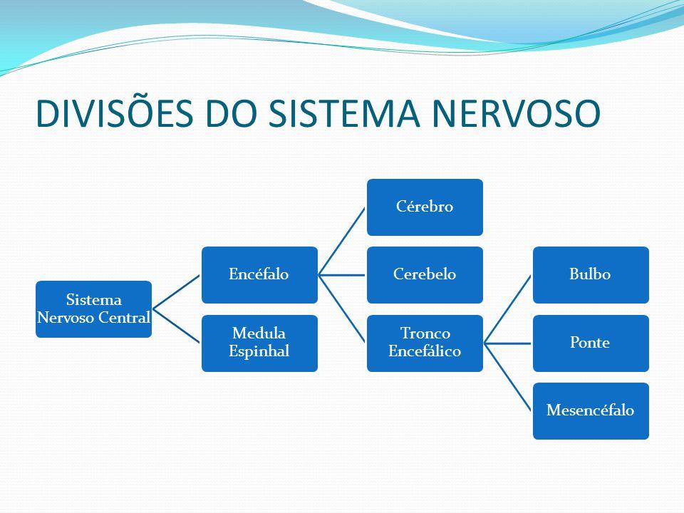 DIVISÕES DO SISTEMA NERVOSO Sistema Nervoso Central EncéfaloCérebroCerebelo Tronco Encefálico BulboPonteMesencéfalo Medula Espinhal