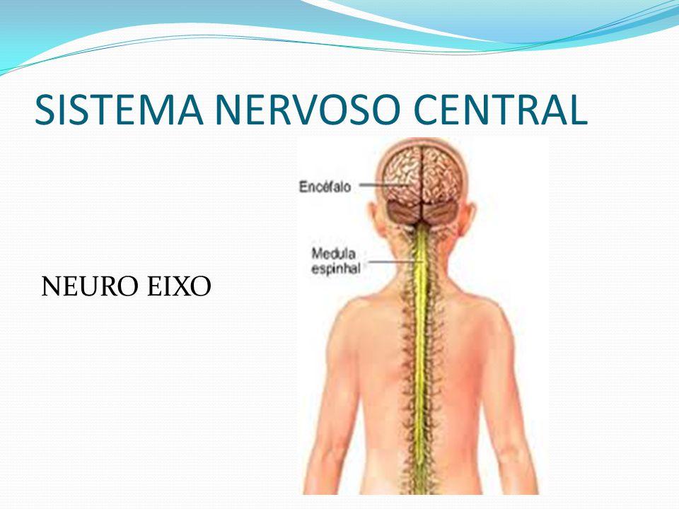SISTEMA NERVOSO CENTRAL NEURO EIXO