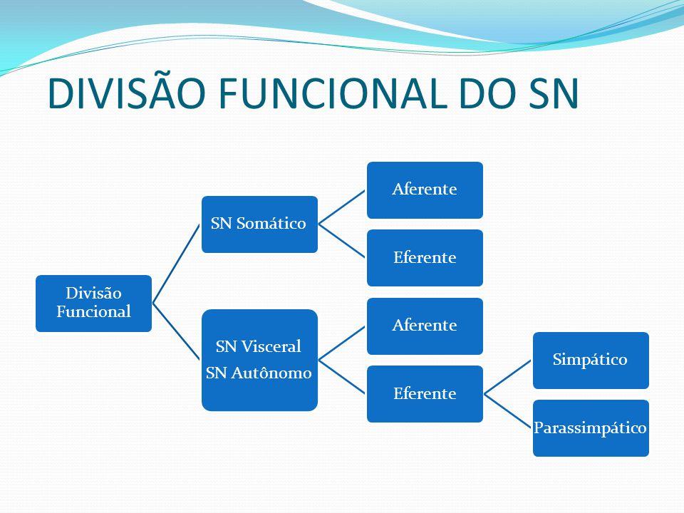 DIVISÃO FUNCIONAL DO SN Divisão Funcional SN SomáticoAferenteEferente SN Visceral SN Autônomo AferenteEferenteSimpáticoParassimpático