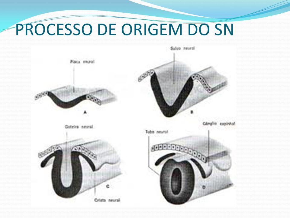 PROCESSO DE ORIGEM DO SN