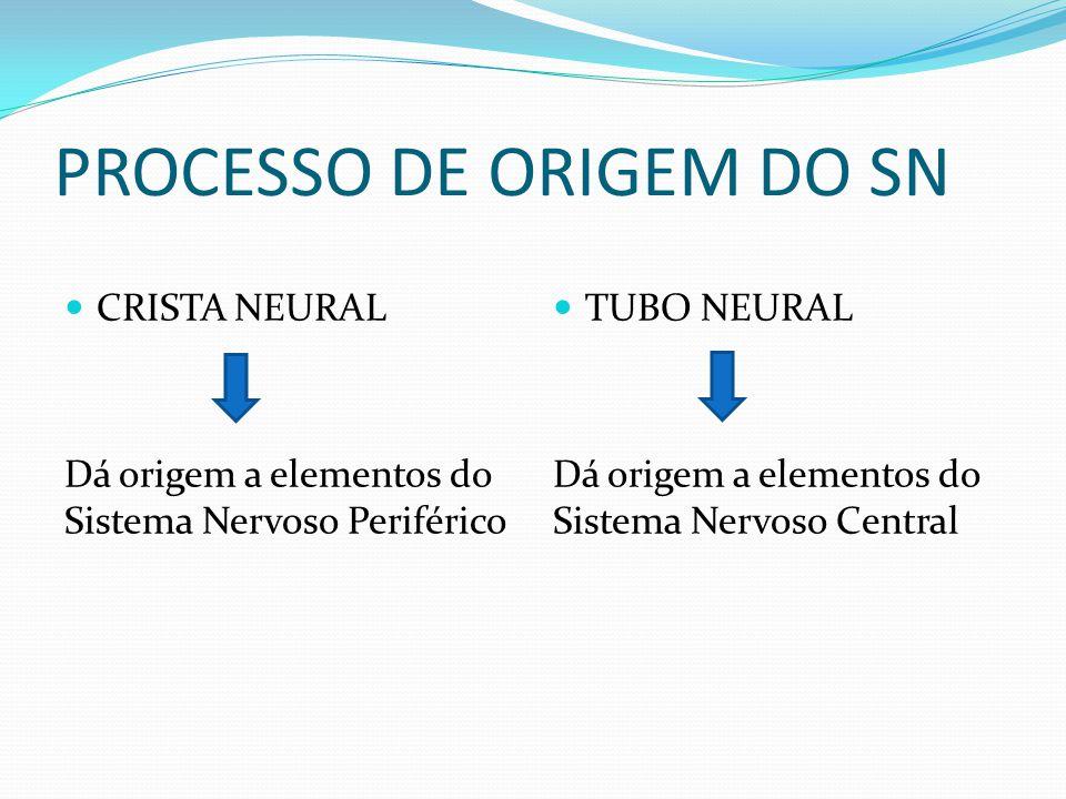 CRISTA NEURAL Dá origem a elementos do Sistema Nervoso Periférico TUBO NEURAL Dá origem a elementos do Sistema Nervoso Central