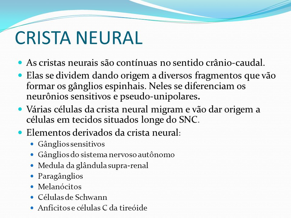 CRISTA NEURAL As cristas neurais são contínuas no sentido crânio-caudal.