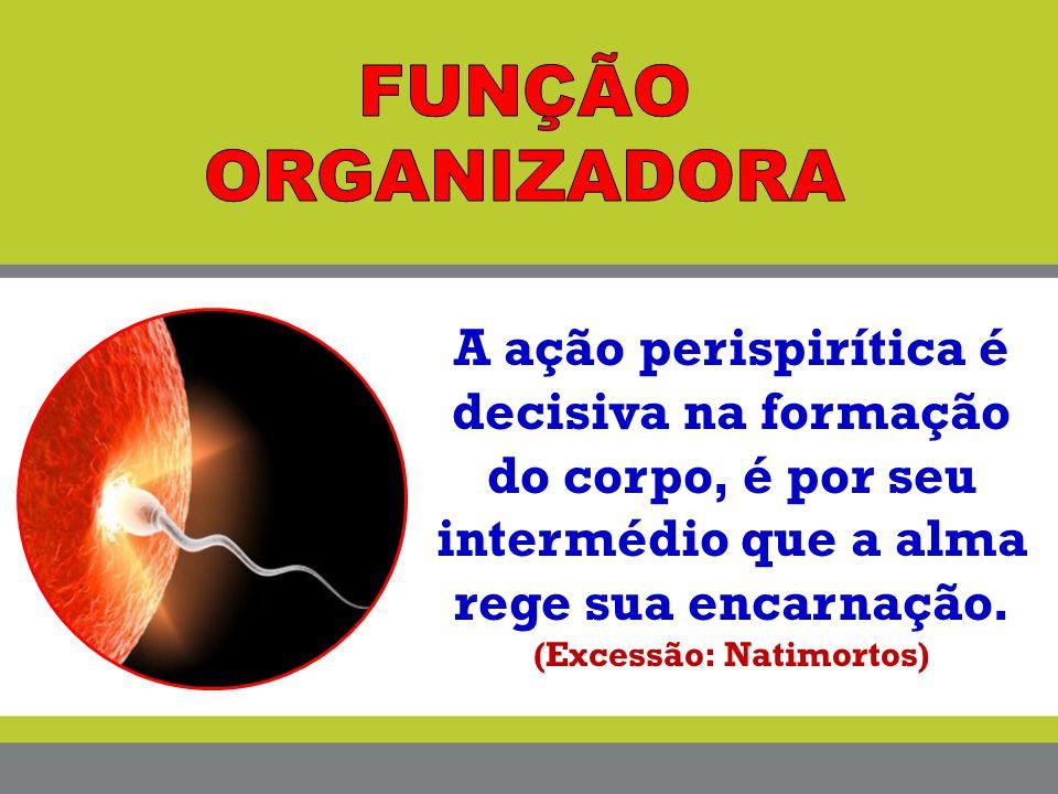 A ação perispirítica é decisiva na formação do corpo, é por seu intermédio que a alma rege sua encarnação. (Excessão: Natimortos)