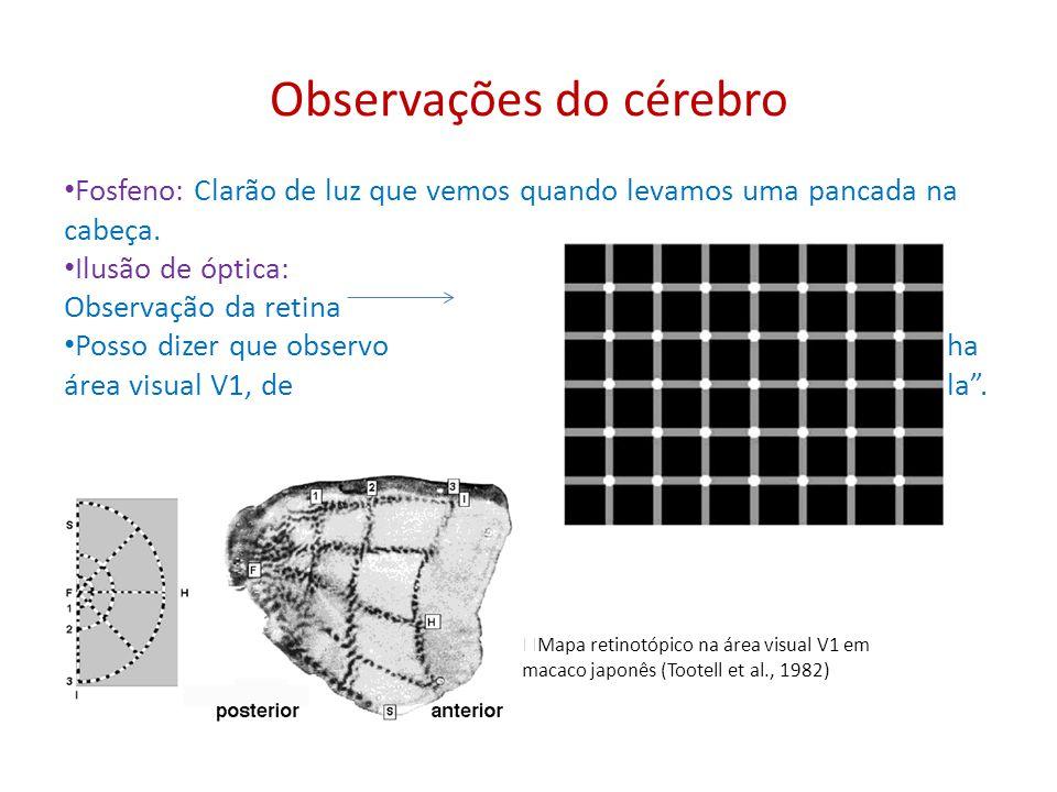 Observações do cérebro Fosfeno: Clarão de luz que vemos quando levamos uma pancada na cabeça. Ilusão de óptica: Observação da retina Posso dizer que o