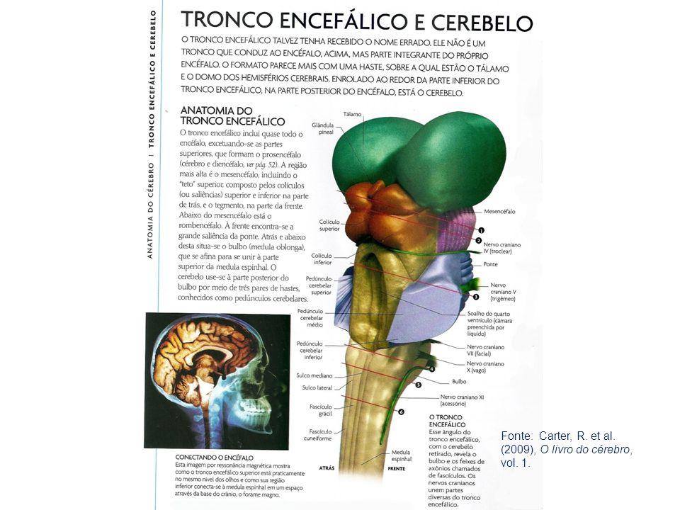 Fonte: Carter, R. et al. (2009), O livro do cérebro, vol. 1.