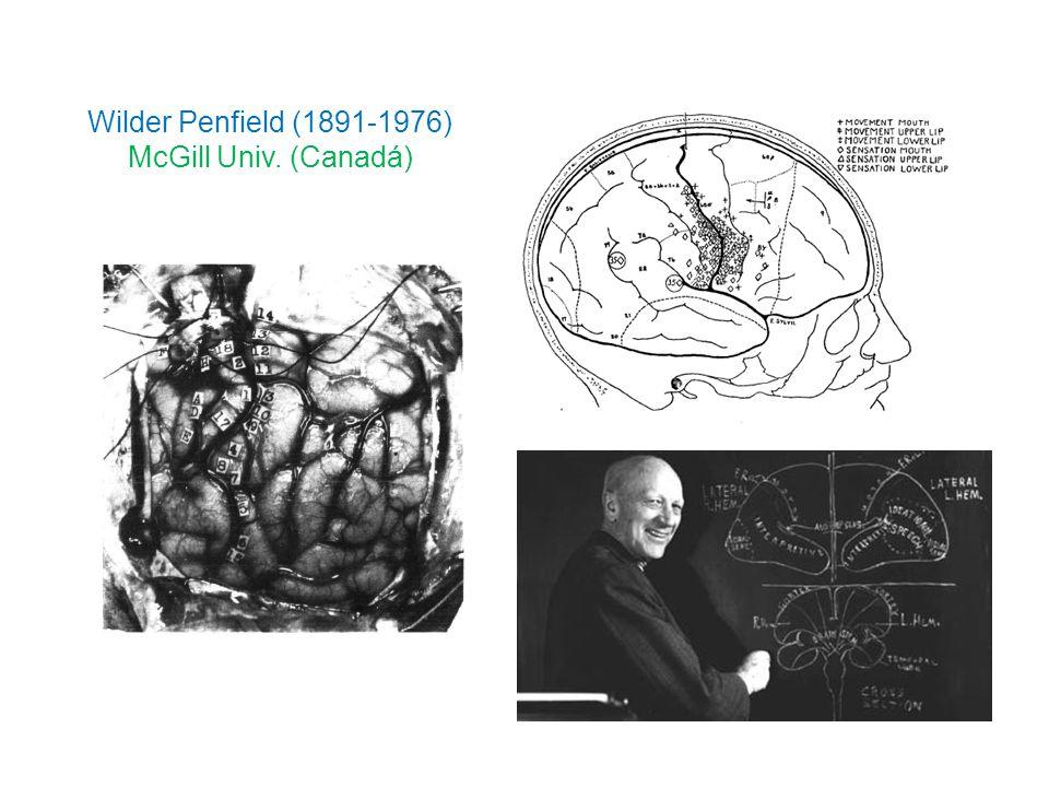 Wilder Penfield (1891-1976) McGill Univ. (Canadá)