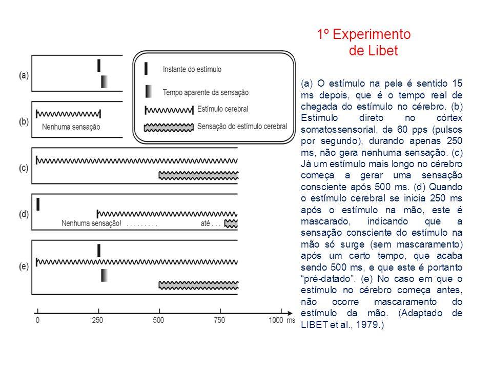 1º Experimento de Libet (a) O estímulo na pele é sentido 15 ms depois, que é o tempo real de chegada do estímulo no cérebro. (b) Estímulo direto no có
