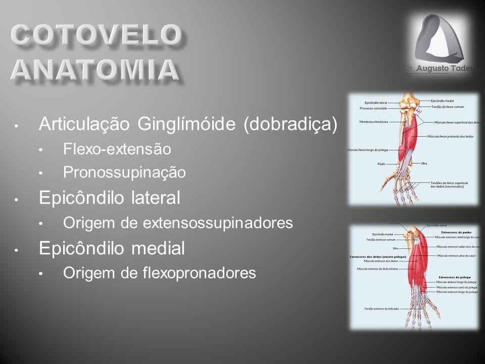 Articulação Ginglímóide (dobradiça) Flexo-extensão Pronossupinação Epicôndilo lateral Origem de extensossupinadores Epicôndilo medial Origem de flexop