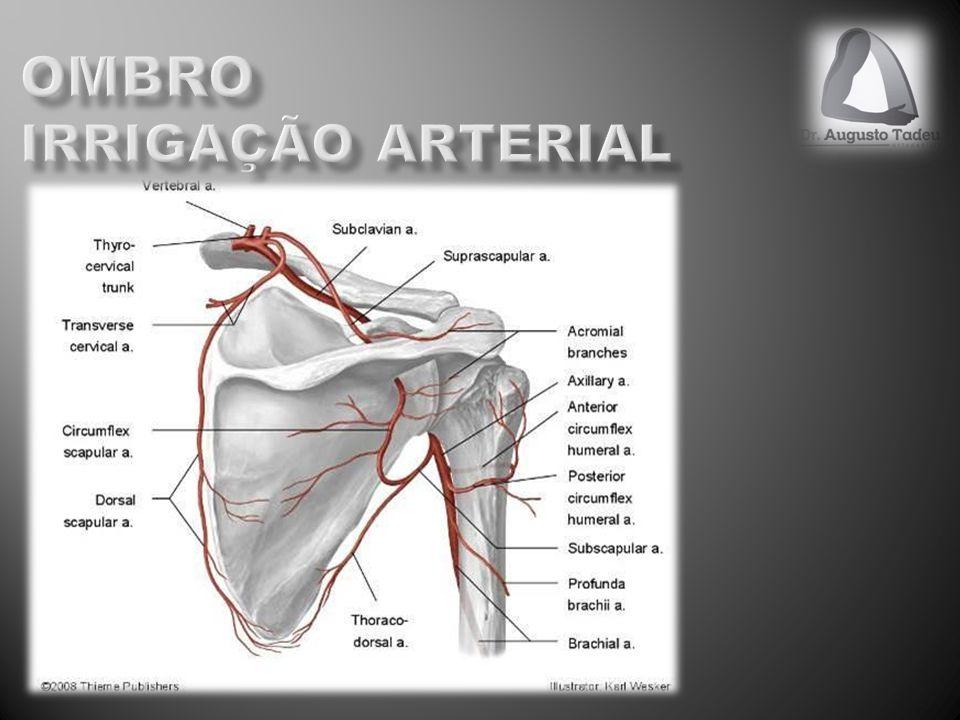 5% das quiexas em ortopedia Epidemiologia Ombro dominante Dor em ombro dominante Arco doloroso de Neer (70-120) graus Crepitações (lesão bursal) Etiopatogenia Hipovascularização X Impacto subacromial Fases de Neer I - <25a, Tendinite, Conservador II – 25a-40a, Tendinose, Conservador/Cirúrgico III - >40a, Lesão, Cirúrgico
