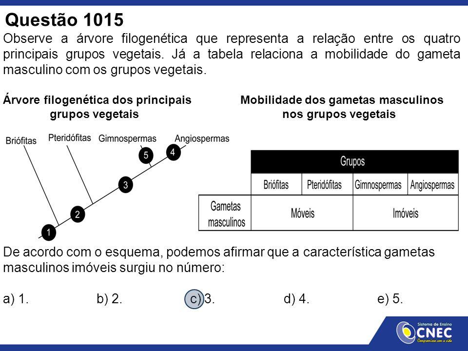 Questão 1015 Observe a árvore filogenética que representa a relação entre os quatro principais grupos vegetais. Já a tabela relaciona a mobilidade do