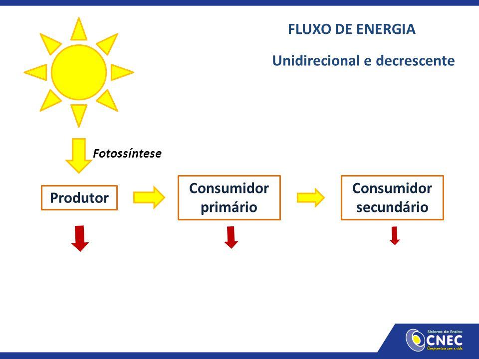Produtor Consumidor primário Consumidor secundário Fotossíntese FLUXO DE ENERGIA Unidirecional e decrescente