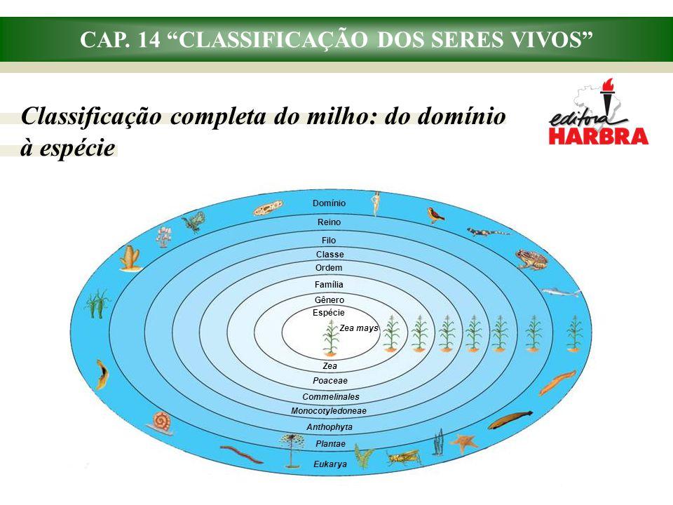 """CAP. 14 """"CLASSIFICAÇÃO DOS SERES VIVOS"""" Classificação completa do milho: do domínio à espécie Domínio Reino Filo Classe Ordem Família Espécie Gênero Z"""